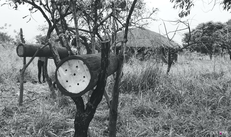 烏干達的傳統蜂箱